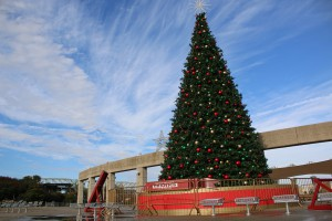 A photo of a Christmas tree