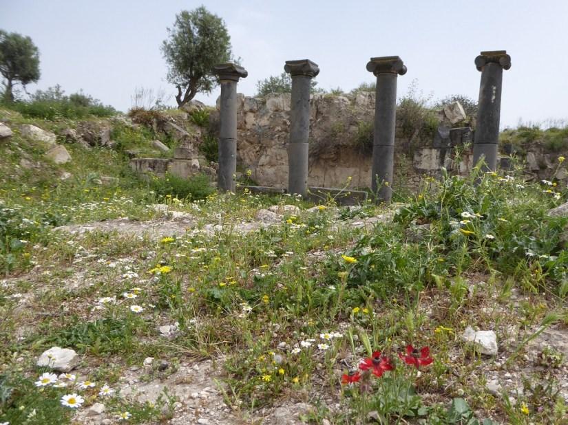 ummqaisflowers