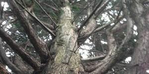Dead-Wooding-Service