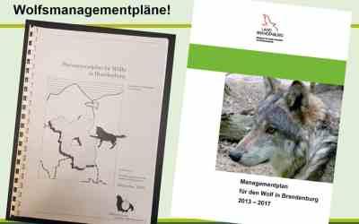 Letzte Chance für ein zukunftsorientiertes Wolfsmanagement