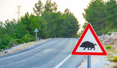 Senyal d'animals creuant la carretera
