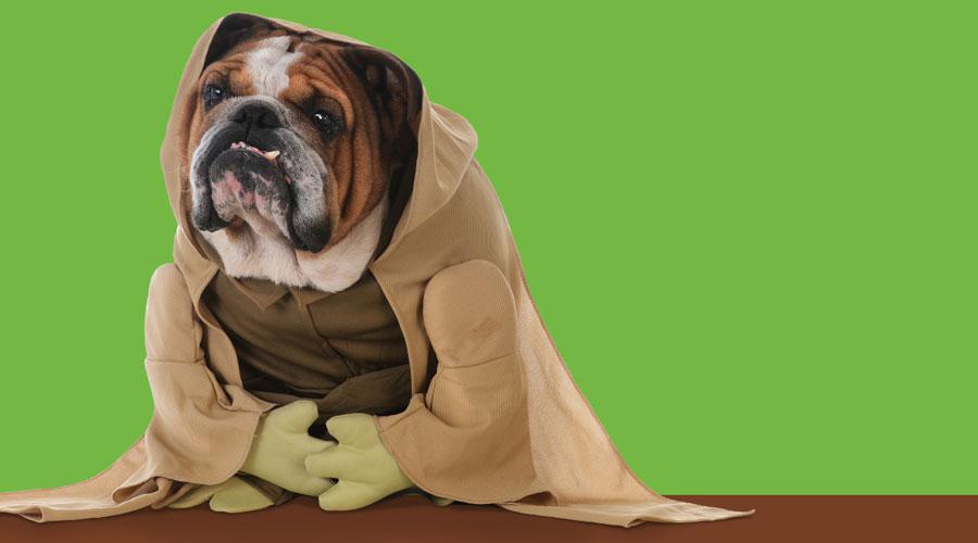 Un gos disfressat, imatge de la campanya per fer el registre d'adn