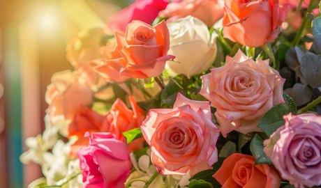 Roses de diferents colors