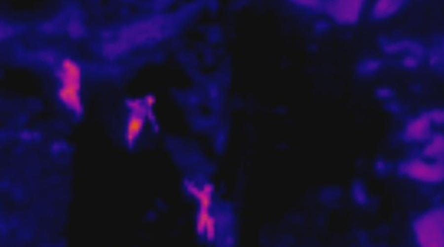 Una imatge termogràfica d'un rescat de muntanya captada per un dron