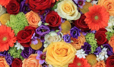 Flors variades