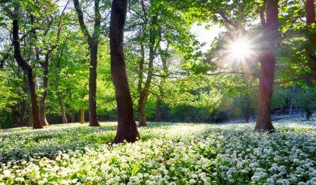 Sol entre arbres i flors