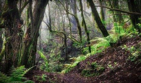 Bosc europeu