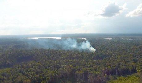 Incendi en un bosc