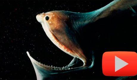 monstre marí
