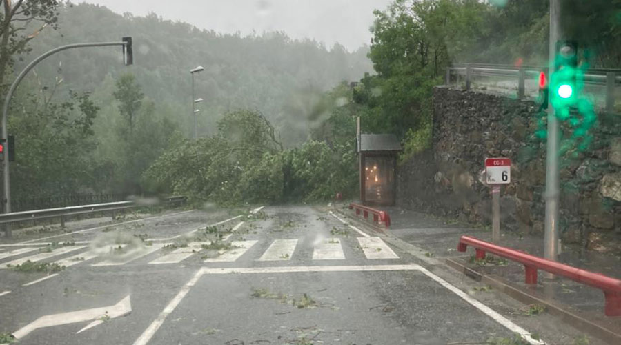 Un arbre caigut a causa d'una tempesta a la CG3