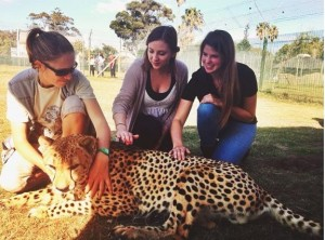 Students pet a cheetah in Capetown, South Africa. (Photo by Atalanta Benitz)