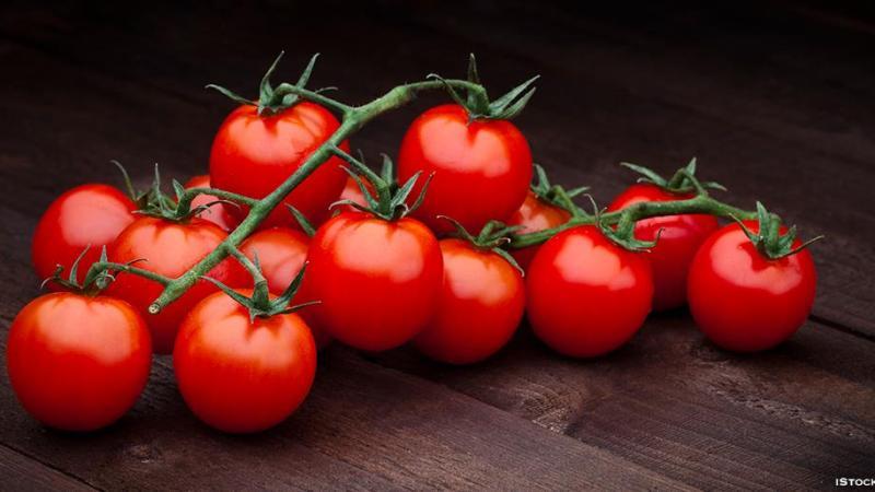 Nos belles tomates d'Italie: un rapport dénonce l'exploitation des migrants illégaux qui les cultivent