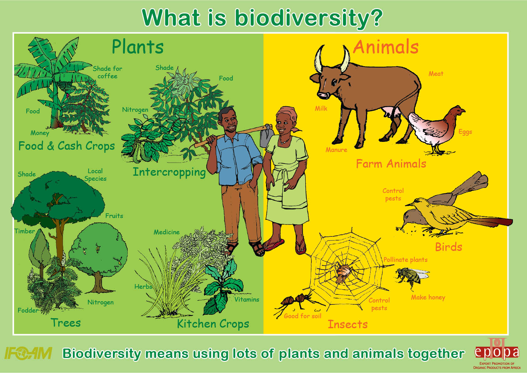 Enb Organism Population Coummunity Ecosystem Ecology