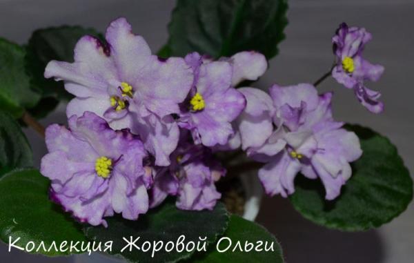 РСДриада Форум цветоводов Фрау Флора