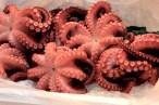 Octopus at Tsukiji Market