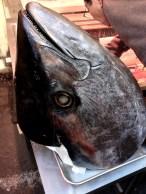Tuna Head at Tsukiji Market