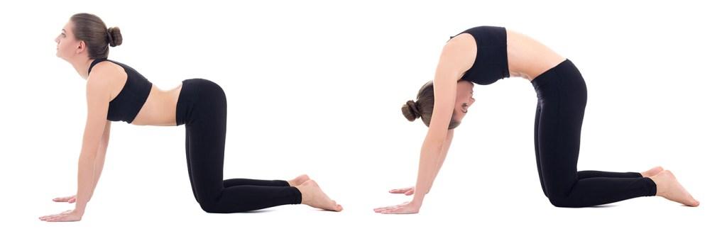 pose de gato en yoga