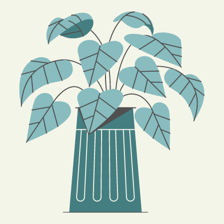 Leafy plant growing out of pot