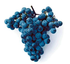 Caberlot Grape