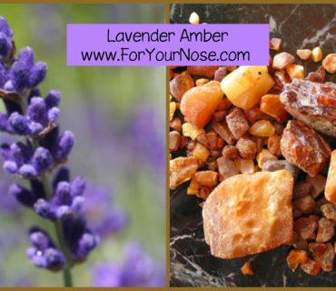 lavender amber fragrance