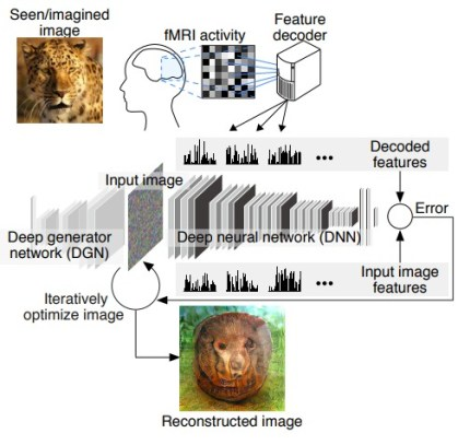 Mind-reading AI Image Reconstruction 1