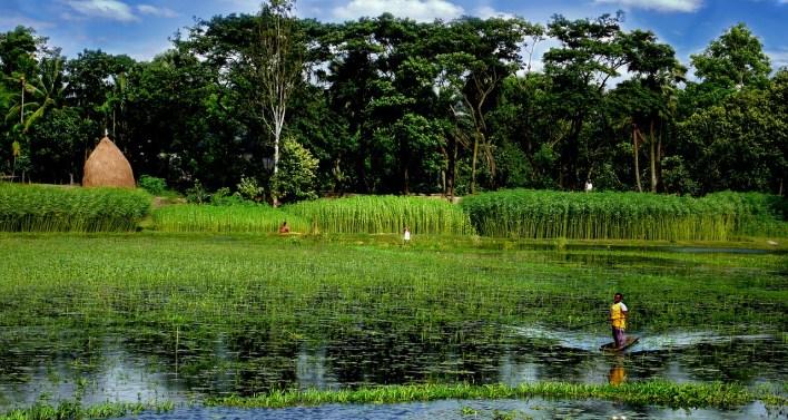 bangladesh-3543466_1280.jpg