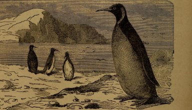 10 Years of Using Linux: How It Was Before, And How it Became 1