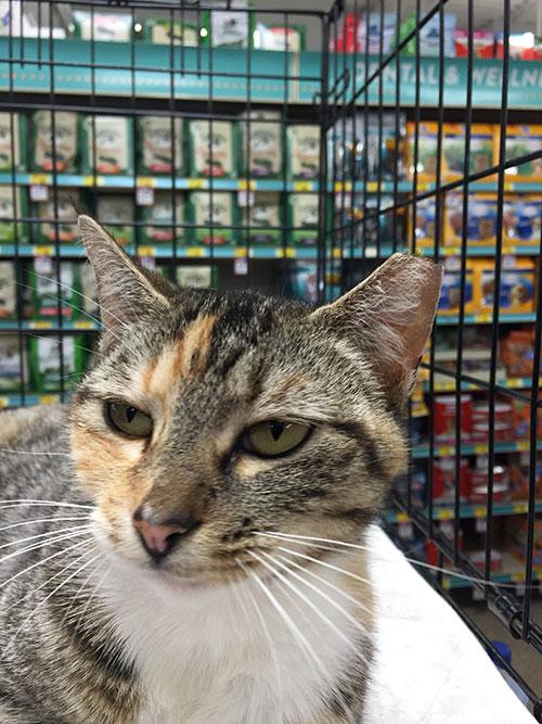 Cat Kitten Adoption Event