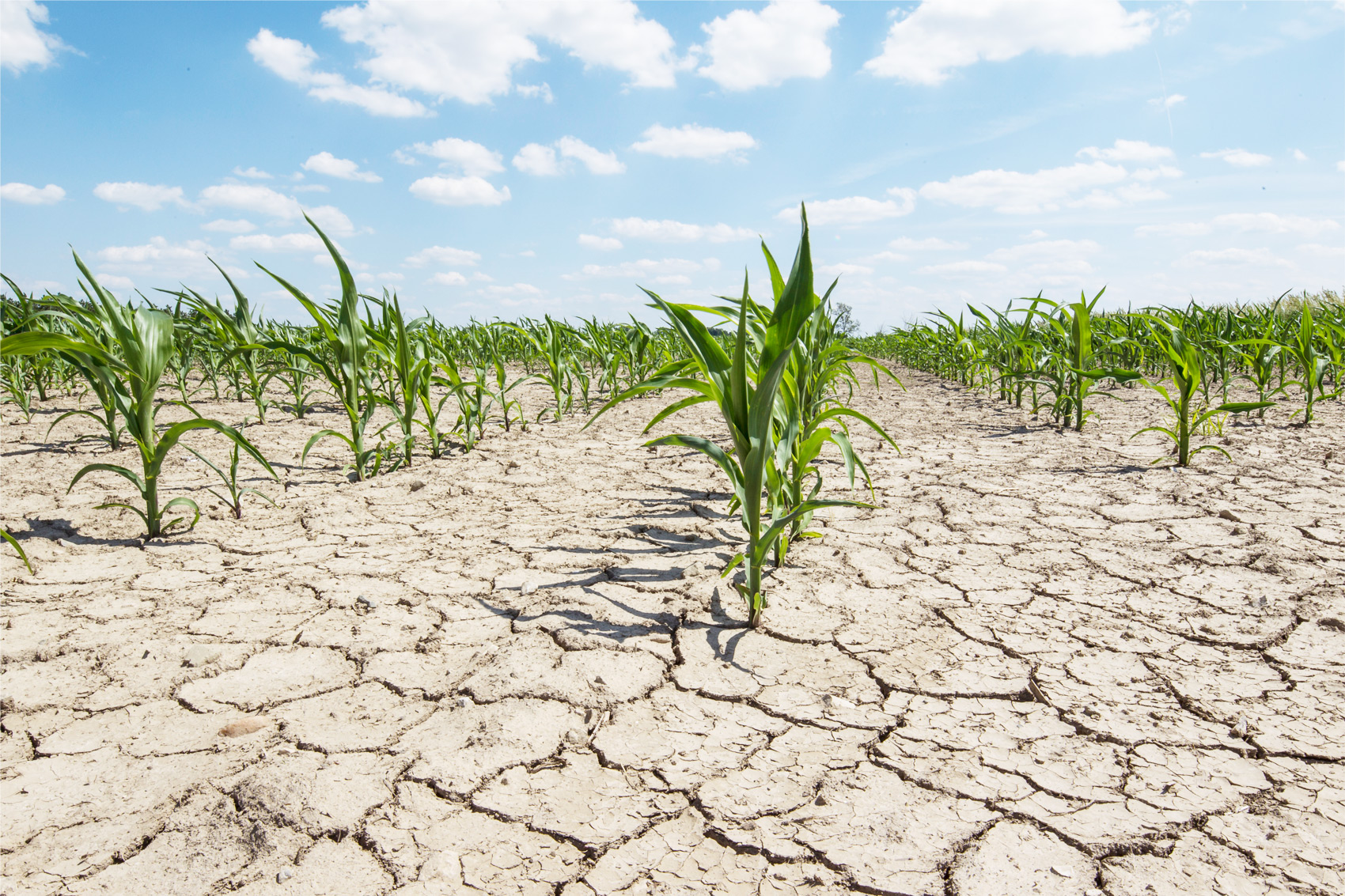 Drought – A Natural Disaster Related to Famine
