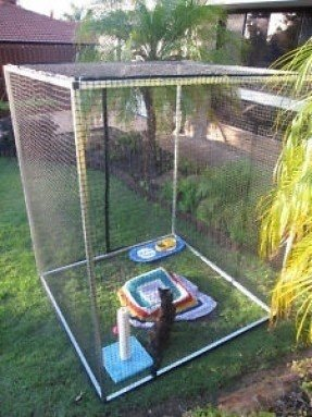 cat cages enclosures ideas on foter