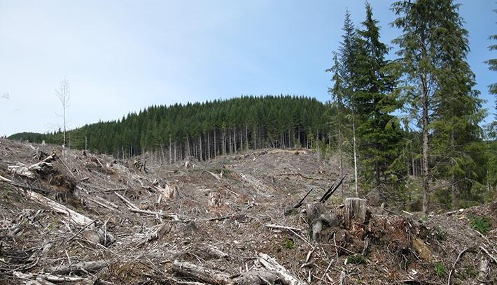 Erdőőrségekkel fékeznék az illegális fakitermelést
