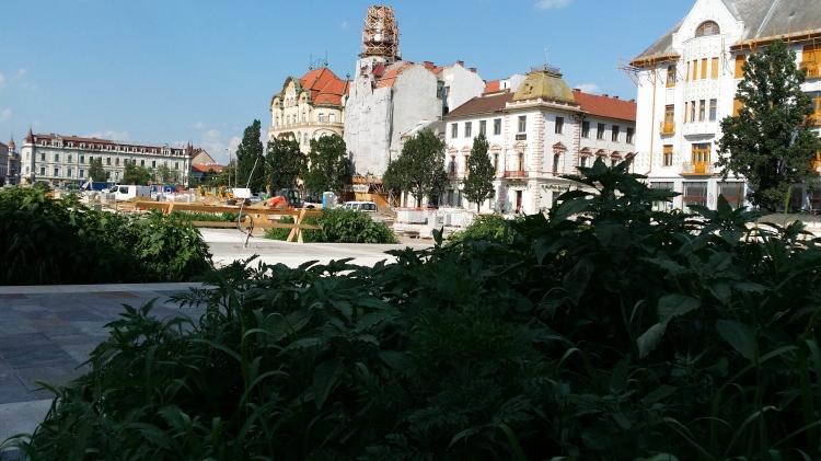 Spontán füvészkert a Szent László téren