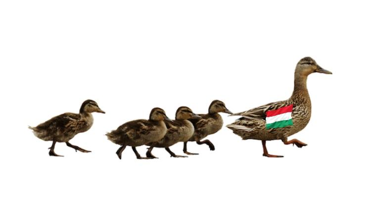 Már megint a magyar példa!