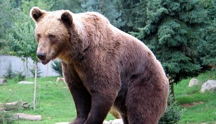 Embert harapott meg a medve Gyergyóban