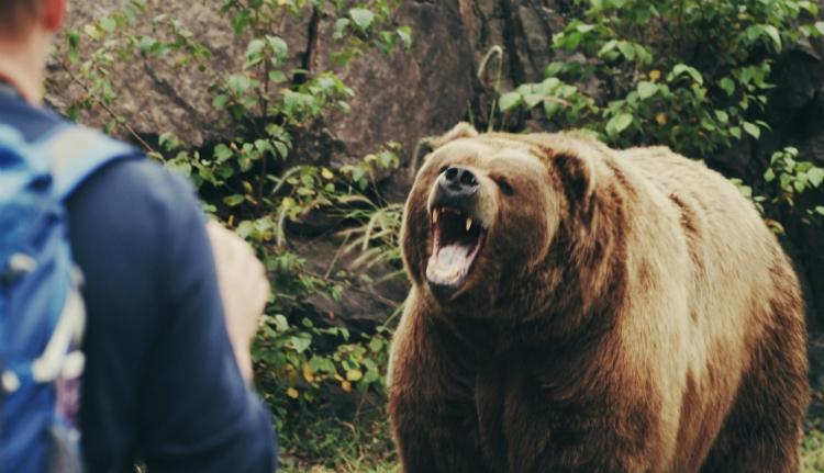 Két emberre támadt Fogarason a medve