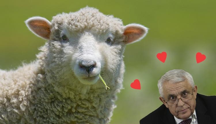 A juhmániás mezőgazdasági miniszter gyapjas kedvencét népszerűsíti