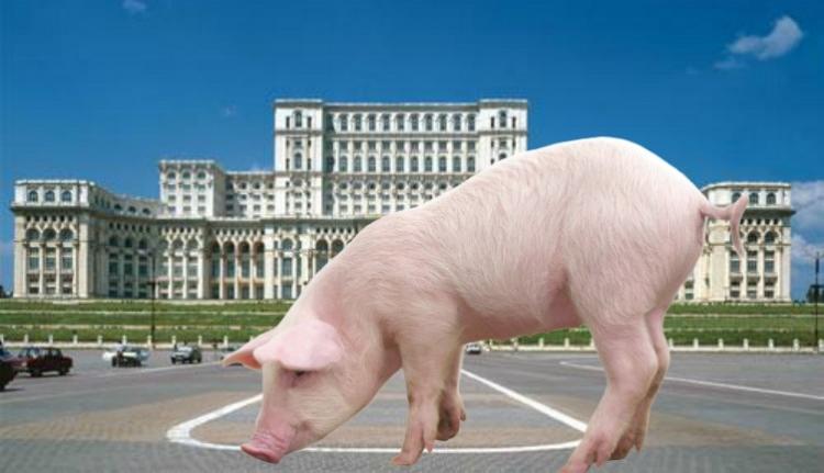 A képviselőházat nem zavarja a sertéspestisügy, a legfőbb ügyészség vizsgálatot indít
