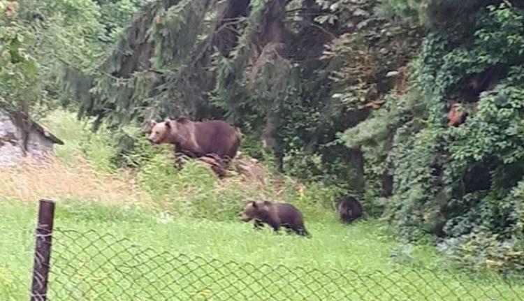 Kukából mentettek medvebocsot a csendőrök Tusnádfürdőn
