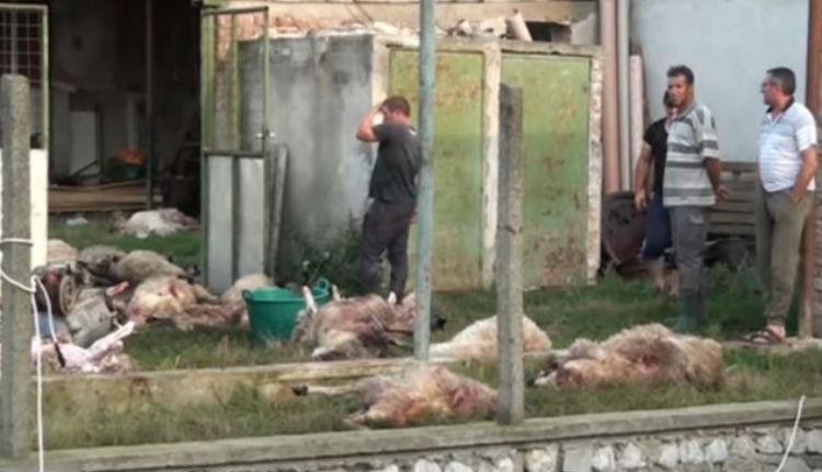 Juhok tucatjait csapta agyon a villám egy erdélyi faluban