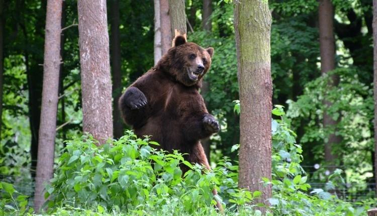 Alapos megfontolás után Hargita megyei medvék sorsáról döntött a minisztérium