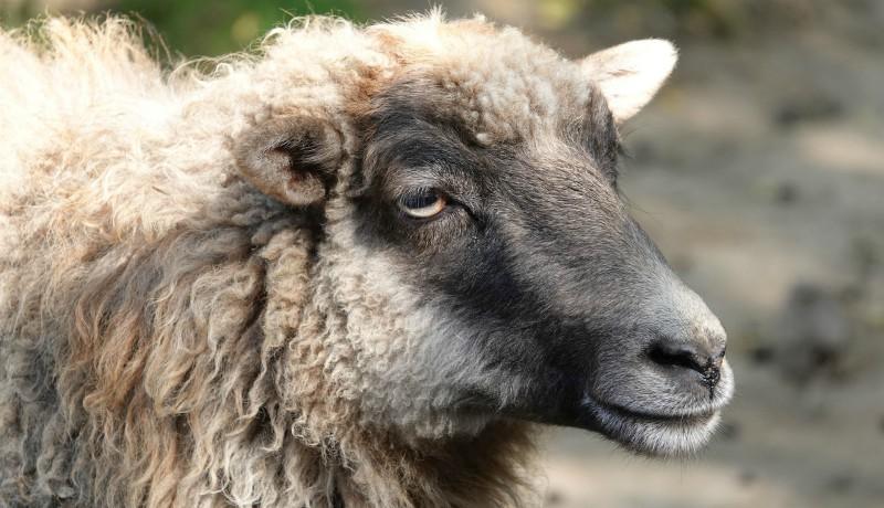 Hahó, emberek, ezt jó tudni: kecskekakival turbózzák fel a piaci tejtermékek bukéját