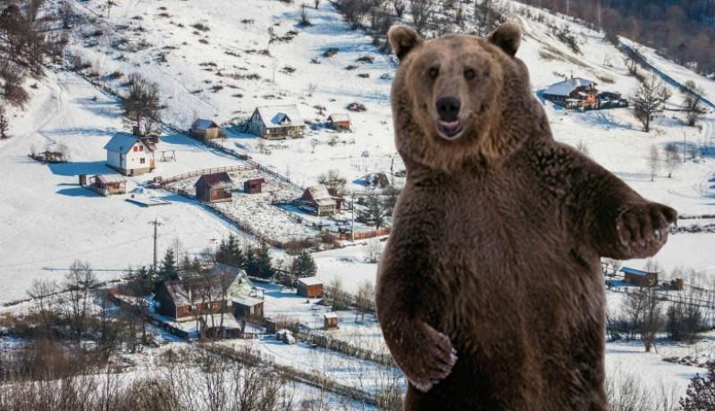 Kegyetlen mészárlást rendezett a medve egy székelyföldi háztáji gazdaságban