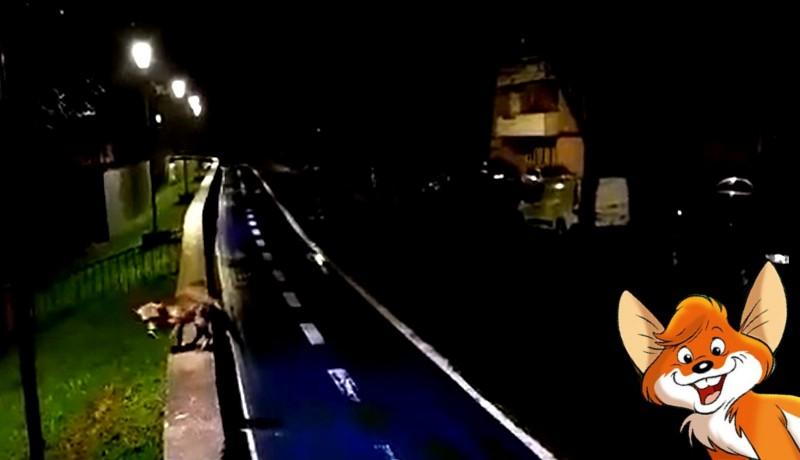 Aradra visszatértek a delfinek… mármint a rókák, de azokból egy teljes család (VIDEÓval)