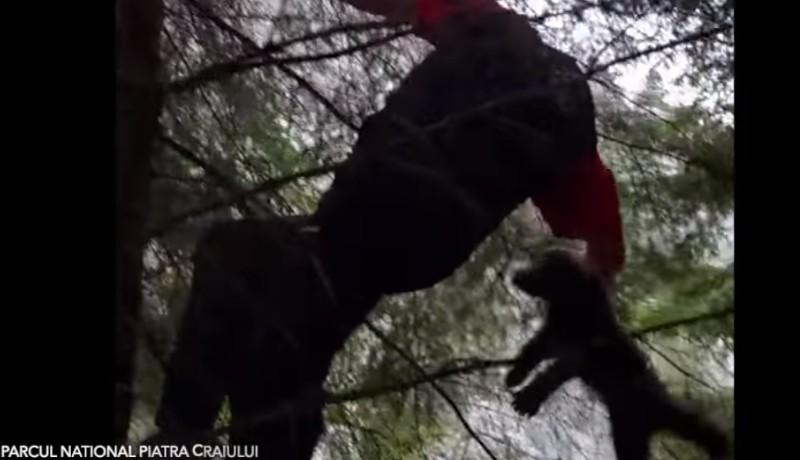 Két eltévedt medvebocsot mentettek meg a vadőrök, miután elvesztették az anyjukat (VIDEÓval)