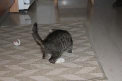 gatos 6
