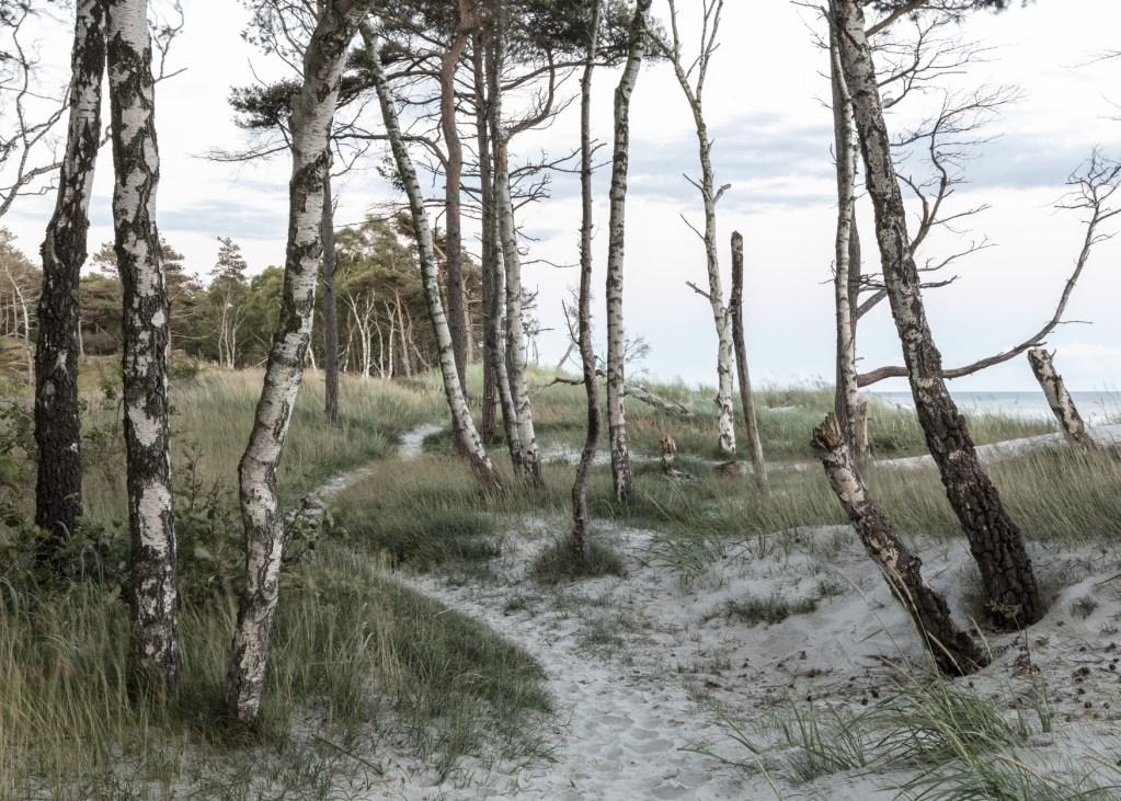 Small trails