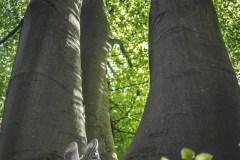 Plener-01-FOTO-Przygoda-w-Świdwinie-Wiosna-19-0322b