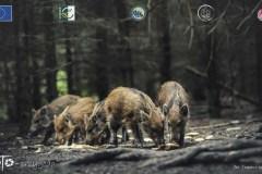 Plener-02-FOTO-Przygoda-w-Świdwinie-Wiosna-19-0952b