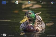 Plener-03-FOTO-Przygoda-w-Świdwinie-Wiosna-19-1397b