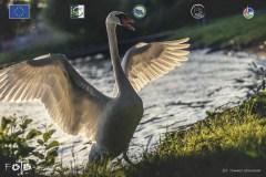 Plener-04-FOTO-Przygoda-w-Świdwinie-Wiosna-19-2084b